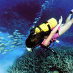 A scuba diver on the Great Barrier Reef, Australia