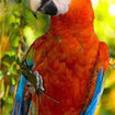 A cute Parrot in Ambergris Caye, Belize