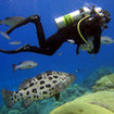 PADI Adventure Diver Course - Enriched Air Nitrox