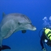 Diving with curious dolphins at Hurghada