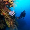 Scuba diving on a wall in Cuba