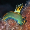 A nudibranch at South Male Atoll
