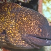 Moray eels are the most common marine encounters