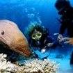 Divers study a giant moray eel in the Mergui Archipelago