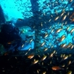 Scuba diving at the Giannis D, Abu Nuhas