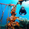 Dive the Liberty Wreck in Tulamben, Bali