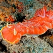 Spanish dancer are always spectacular finds