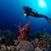 Scuba diving at St. John's, southern Egypt