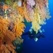 Scub diving in Fiji's Koro Sea