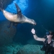 They are curious of divers at the Galapagos Islands