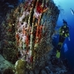 Diving at Egypt's Sinai Peninsula