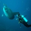 Diving with sunfish at Lembongan Island, Bali