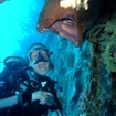 Scuba diving with giant morays in the Red Sea
