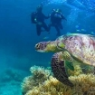 An introduction dive on Australia's Great Barrier Reef