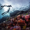 Free diving in the southern Red Sea of Egypt