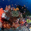 Colourful corals - Komodo Island