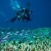 Diving with anthias, Derawan, Kalimantan, Indonesia