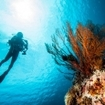 Diving at Derawan Island, Indonesia