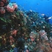 A typical reef scene from Bangka