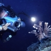 Diving at night with a spotfin lionfish, Fiji