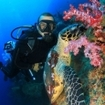 A diver, soft corals and turtle at Shark Point