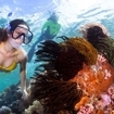 Spectacular snorkelling in these vibrant waters