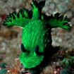 Amazing nudibranch sighting