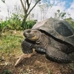 The giant tortoise, Ecuador
