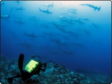 Diving in Cocos, Costa Rica, with hammerhead sharks