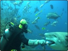 Hand feeding the bull sharks - photo coutesy of Beqa Adventures