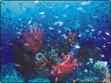 Diving in the Sangihe Archipelago, near Manado