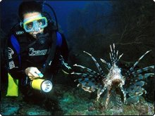 Night diving with lionfish in the Similans - photo courtesy of Marcel Widmer www.Seasidepix.com