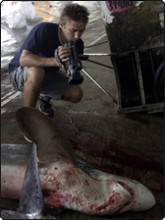 Roger filming the mutilated carcass of a thresher shark - just one of the millions of tragic victims every year of the Asian shark fin trade