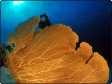 Diver with massive gorgonian fan in Myanmar - photo coutesy of Marcel Widmer - www.seasidepix.com