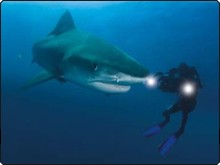 Filming tiger sharks at Aliwal Shoal, Umkomaas, South Africa - photo courtesy of ScubaZoo