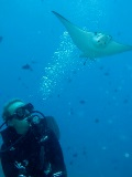 Tine Arentz Floysvik with eagle ray in the Maldives
